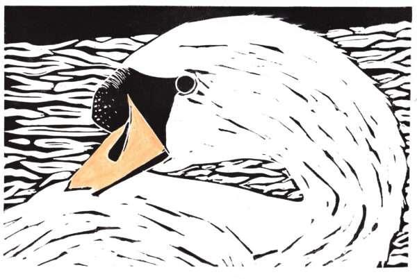 Swan linocut print